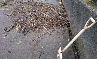 20171015海岸清掃.jpg